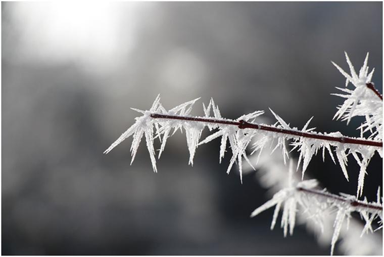 De wintertuin: zo ziet 'ie er altijd zomers uit